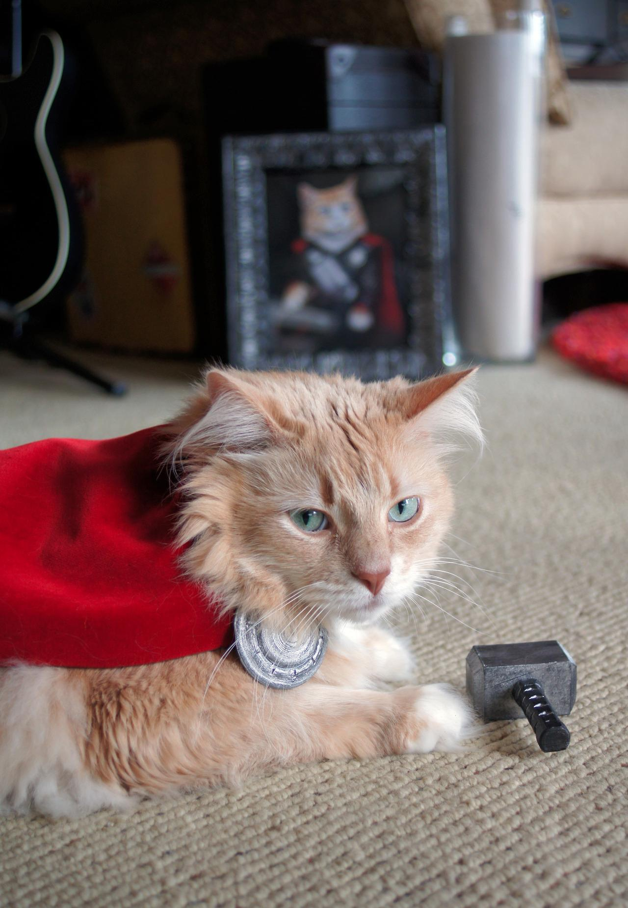 "Here's a Cat Dressed Up Like Thor ""pet"", animal, cat, costume, didymus, dressed, kitty, outfit, thor"