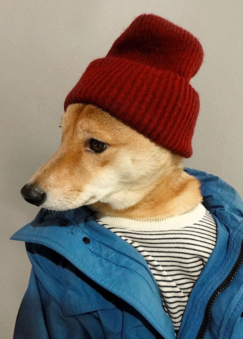 "Menswear Dog Will Keep You Up on the Latest Fashion Trends ""model"", ""pet"", animal, cool, dog, fashion, manorexic, menswear, outfit, style"
