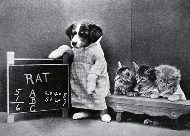 Hilarious Photographs From The First Cat Meme In History