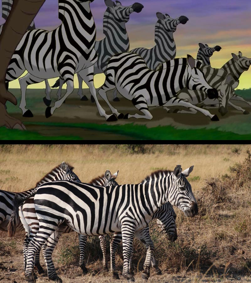 Stills from the Lion King vs A Real Life Safari