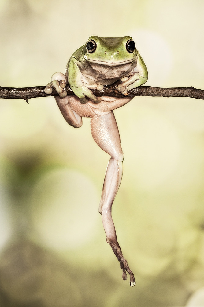 Fun Photos of Personality-Filled Frogs frog, personality, photo, photograph, photography, rain