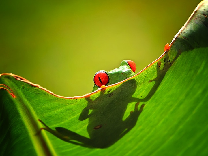 Fun Photos of Personality-Filled Frogs