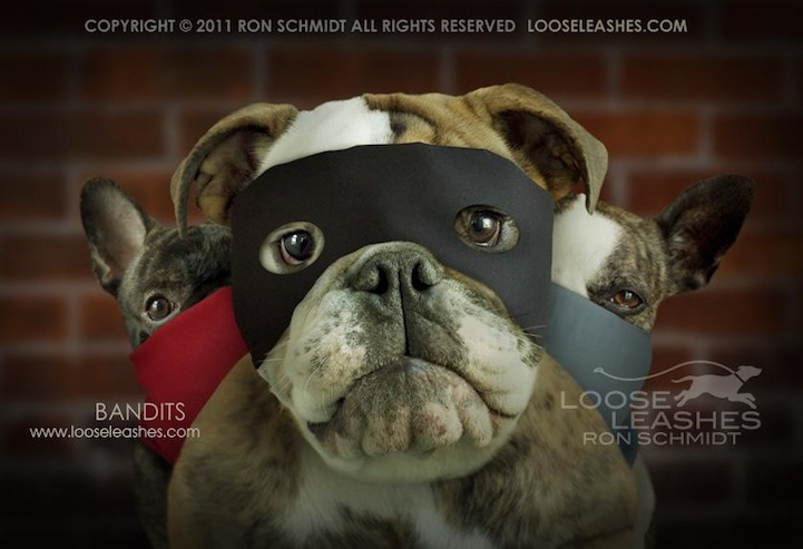 Wonderfully Witty Dog Portraits by Ron Schmidt