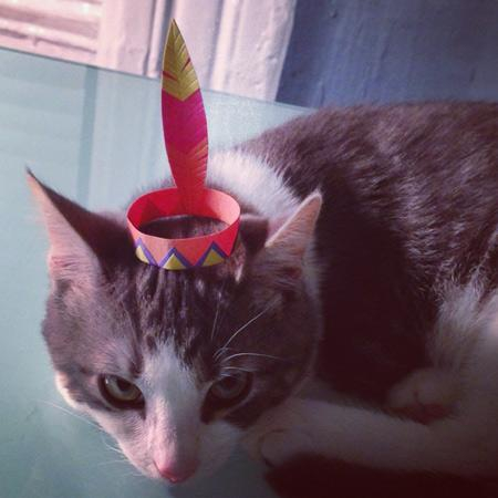 16 Tiny Hats on a Cat