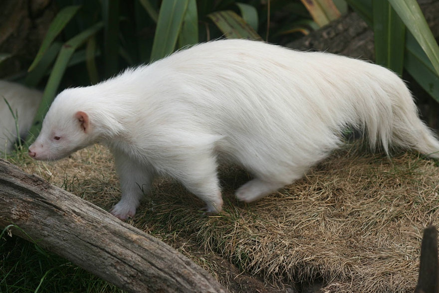 When Nature Runs Out Of Paint: 25 All-White Animals | Bored Panda albinism, albino, albino-animals, animal-photography, animals, full-page, ghost-animals, nature, nature-photography, strange-animals, white-animals
