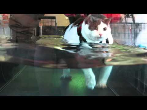 Fat Cat On A Treadmill