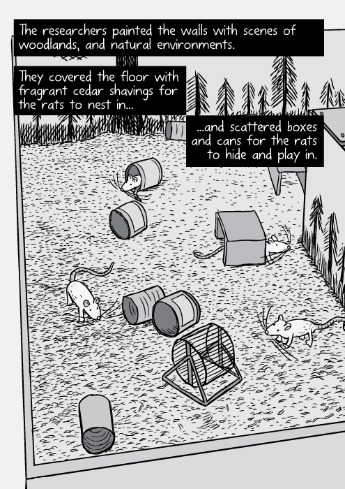 Rat Park, the effects of Morphine. Science artical and Comic