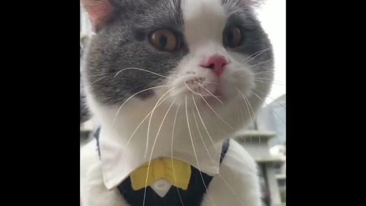 Недовольный кот высказал своему хозяину всё, что о нём думает