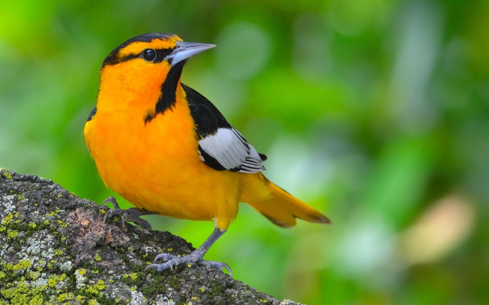 кадре большие картинки птички хочу обратить внимание