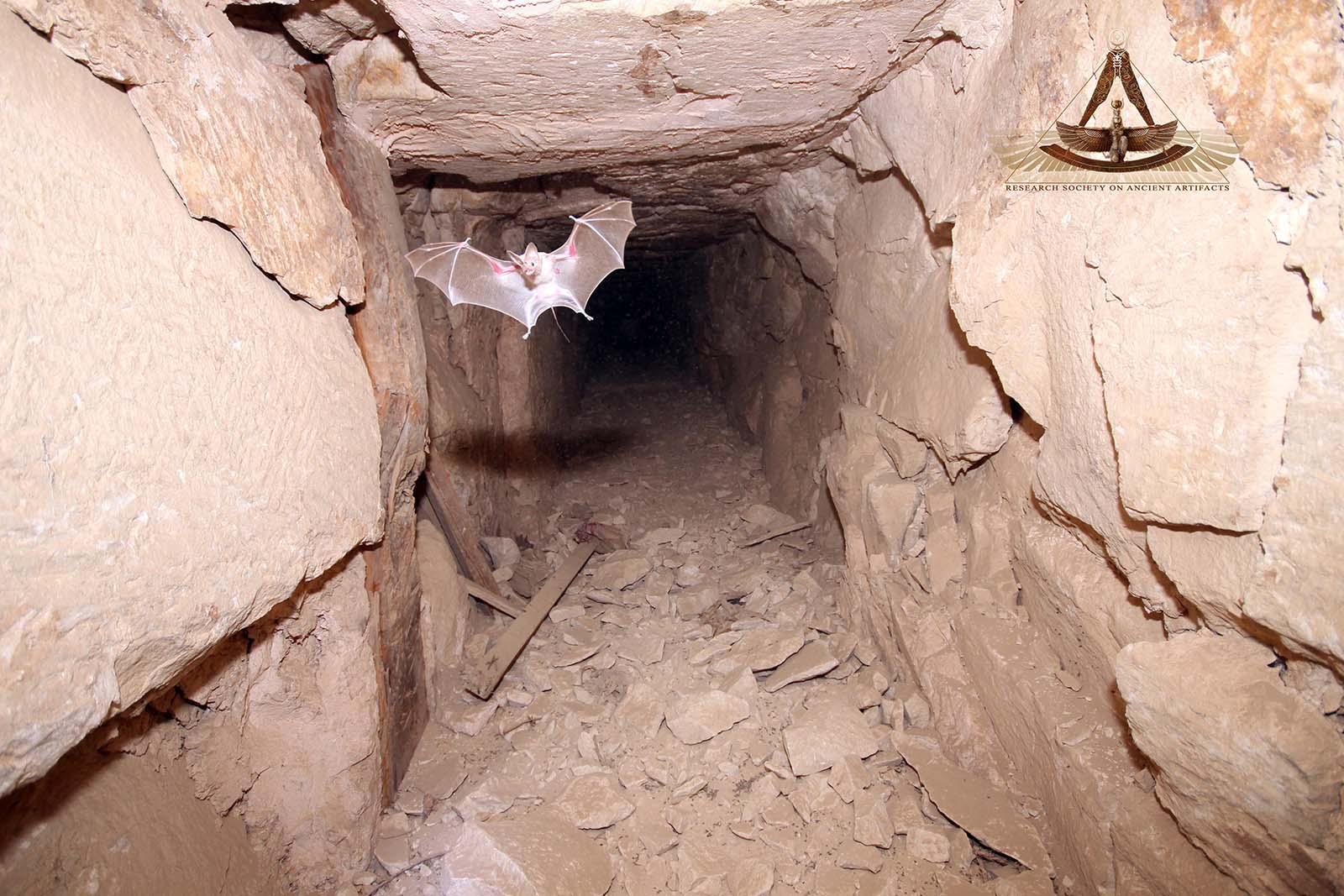 страстное, что находится в пирамидах египта фото морфологические изменения