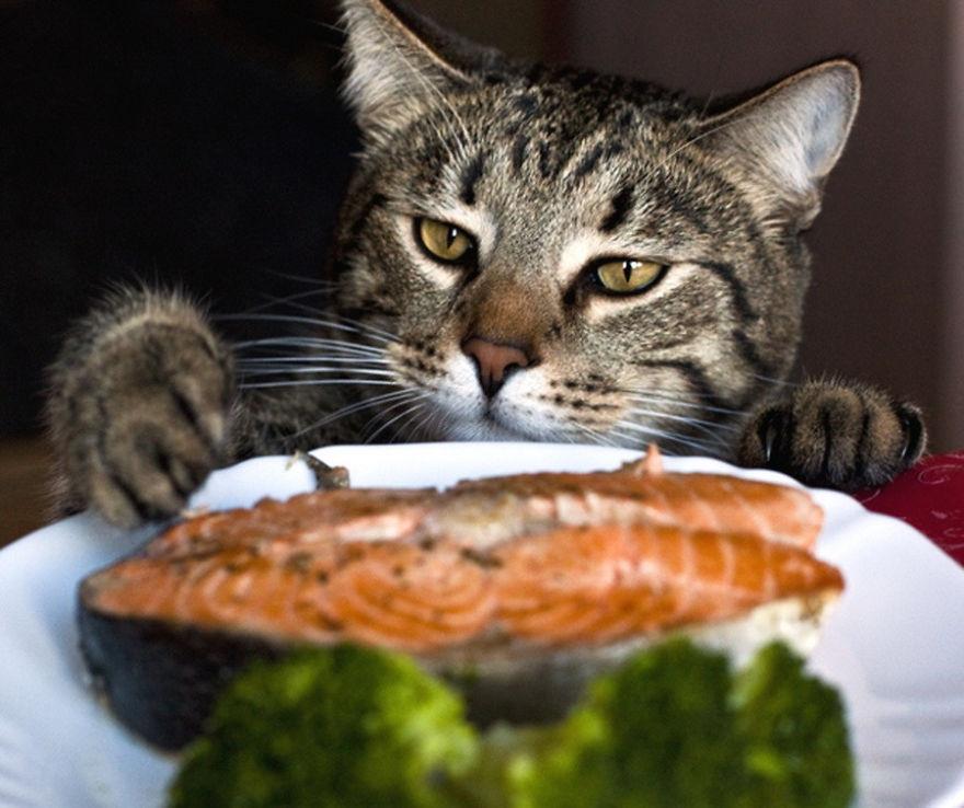 Домом днем, смешные картинки с котами и едой