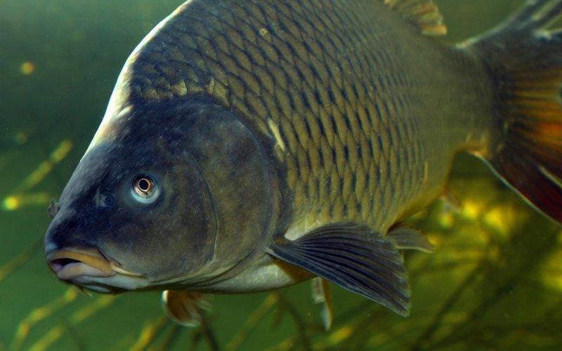 Видео: голый липчанин поплавал с рыбками в аквариуме супермаркета ynews, видео, живая рыба, купание, покупатели, странные люди, супермаркет