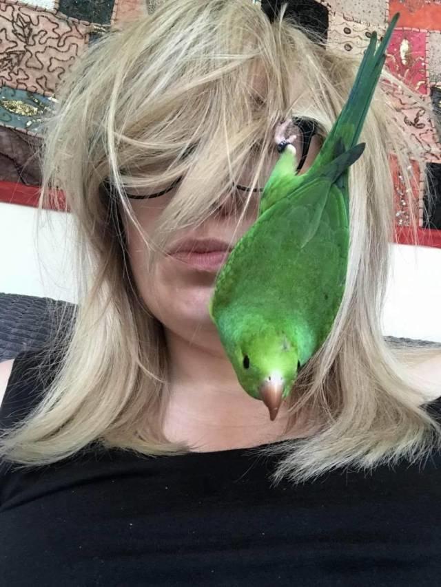 Селфи с попугаем день, животные, кадр, люди, мир, снимок, фото, фотоподборка