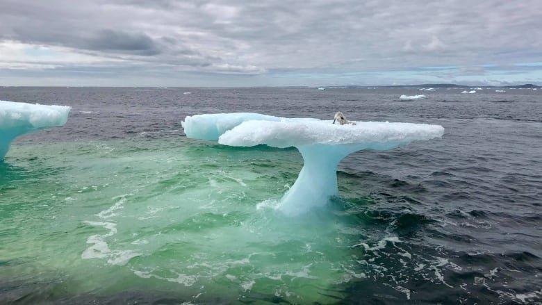 Когда судно подошло ближе к льдине, оказалось, что на ней сидит маленький песец в мире, животные, льдина, песец, спасение